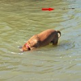 Max Swims 4