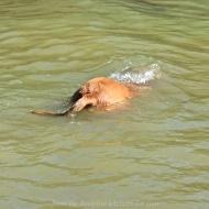 Max Swims 5