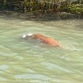 Max Swims 6