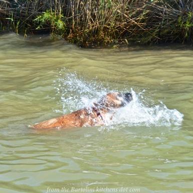 Max Swims 1