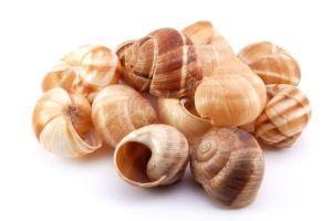 Lumache Shells
