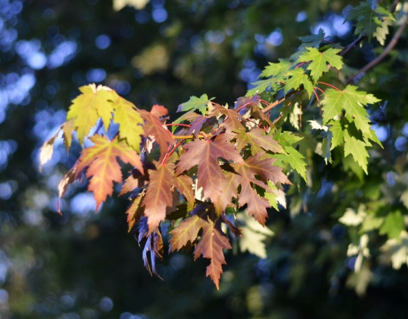 Fall's First Colors - Mid-August!!!