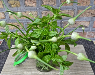 Basil and Garlic Scapes Bouquet