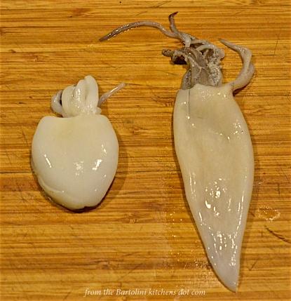 Cuttlefish & Squid