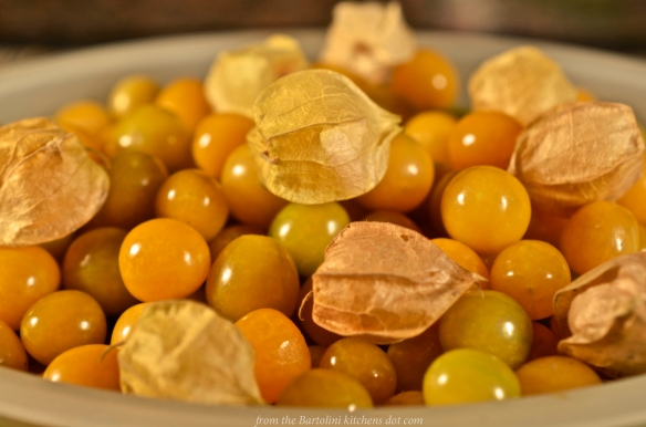 Ground Cherries 1
