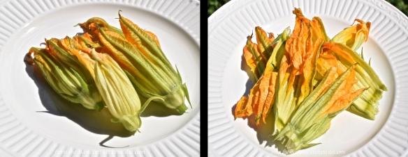 zucchini-blossoms-1x