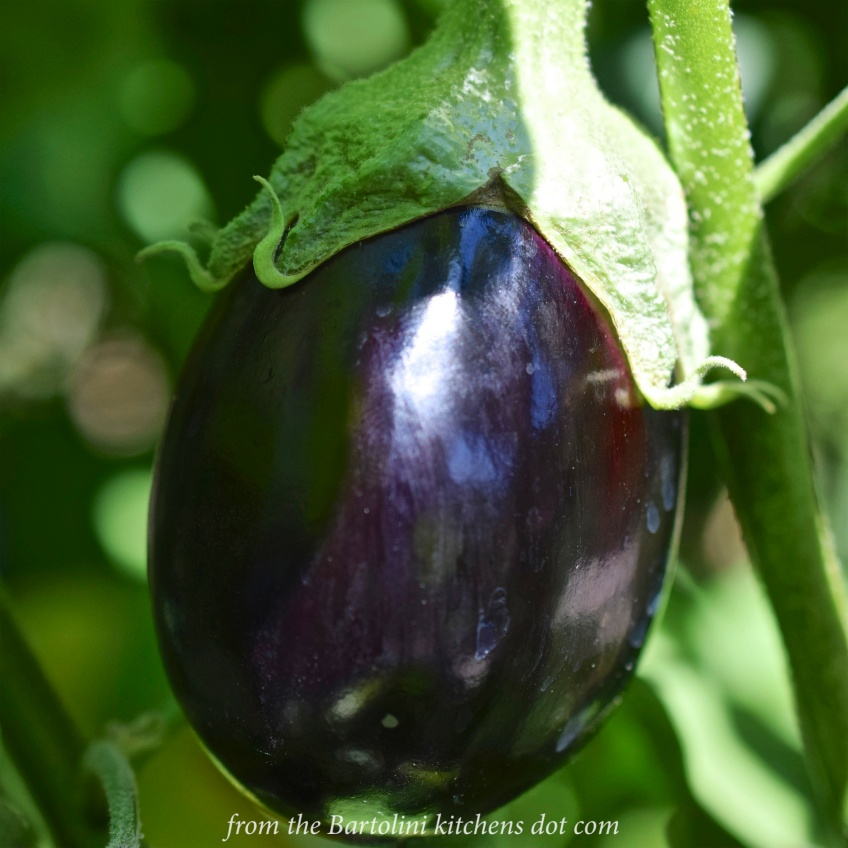 Eggplant Preview 3