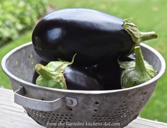 The Day's Eggplant Harvest